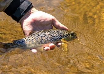 Affinity Water helps restore river wildlife